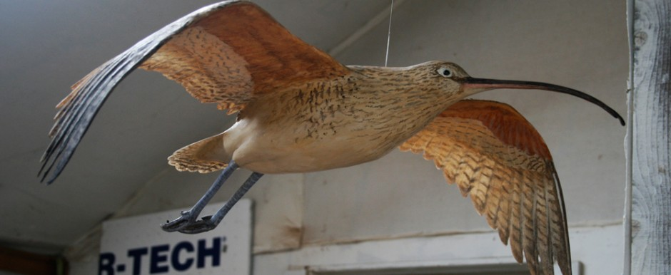 A curlew model