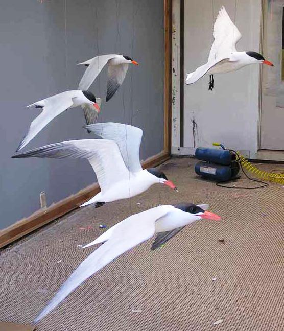 Caspian Terns in our shop