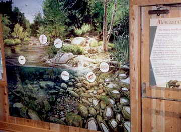Interactive Aquatic Habitat Display 6′ x 7′