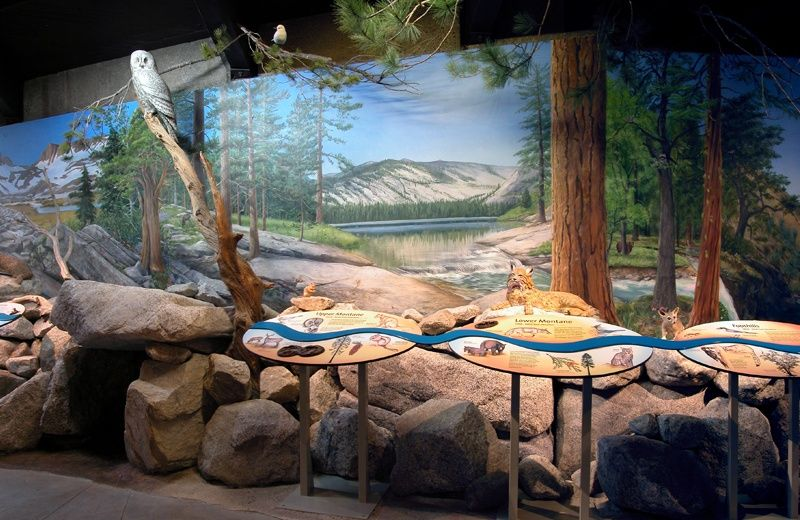 Another View of the Yosemite Life Zone Diorama