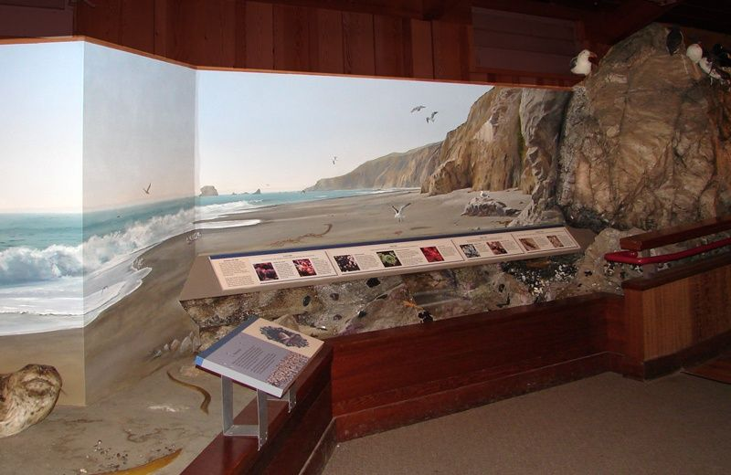 Overview of the interactive tide pool exhibit and mural.