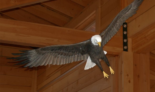 Bald Eagle at installed at the Harnish Visitor Center.