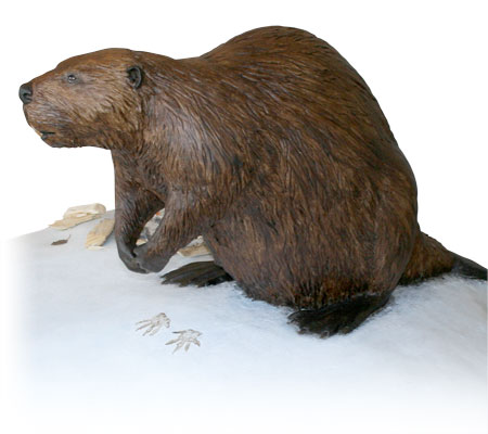 Beaver Model in Eagle Point