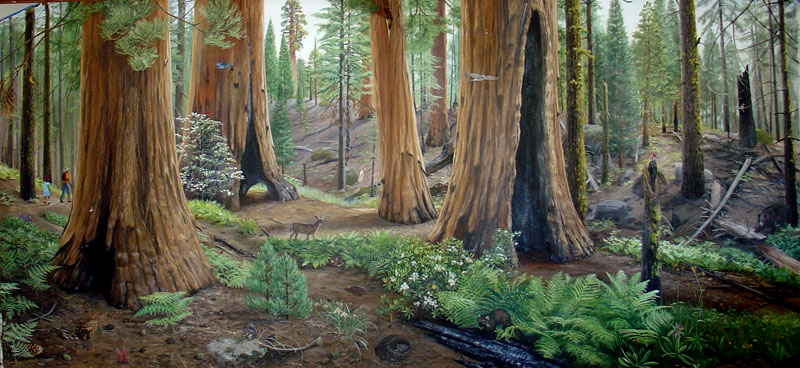 Sequoia Forest 8' X 18'