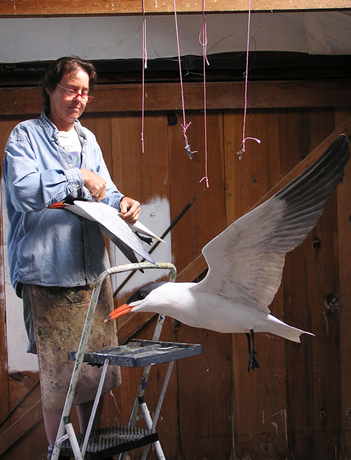Ali Pearson putting the finishing touches on a Caspian Tern