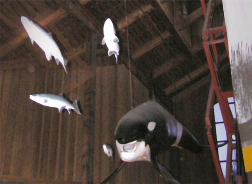 Orca whale and Coho salmon exhibit during installation.