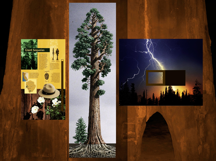 Illustration of a giant sequoia completed by Alumni Exhibits
