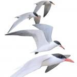 terns-frPDF_1000w-150x150